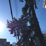 Tree Pruning at Intersection Of Saint Peter St & Boylston St, Jamaica Plain