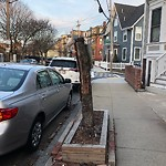 Dead Tree Removal at 9 Thomas Park, 5, South Boston