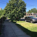 Tree Pruning at 1201 Bennington St, 1, East Boston
