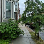 Tree Pruning at 154 W 2nd St