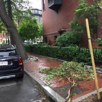Tree Pruning at 53 Concord Sq, Roxbury