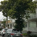 Tree Pruning at 1125 Saratoga St, East Boston