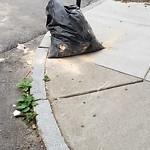 Residential Trash out Illegally at 351 Sumner St, East Boston