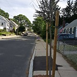 New Tree Requests at 15 New Haven St, West Roxbury