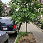 Tree Pruning at 25 Peterborough St