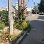 Needle Clean-up at Intersection Of Batchelder St & Marshfield St, Roxbury