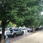 Tree Pruning at Intersection Of Essex St & Main St, Charlestown