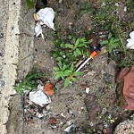 Needle Clean-up at 110 Saint Botolph St