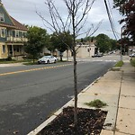 Dead Tree Removal at 81 Welles Ave, Dorchester