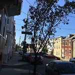 Tree Pruning at 365a Sumner St, 1, East Boston