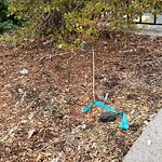 Needle Clean-up at Intersection Of Claremont St & Greenwich Park, Roxbury