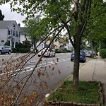Tree Pruning at 1453 Centre St West Roxbury