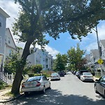 Tree Pruning at 18 Armandine St, 1, Dorchester