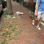 Litter at 12 Union Park St, 1, Roxbury