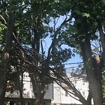 Dead Tree Removal at 263 Magnolia St, 1, Dorchester