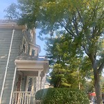 Tree Pruning at 759 Washington St, Dorchester