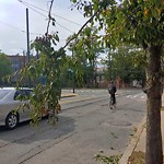 Tree Pruning at 309 Heath St, 1 4, Mission Hill