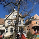 Tree Pruning at 91 Tonawanda St, Dorchester