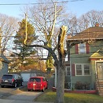 Dead Tree Removal at 5 Rambler Rd, Jamaica Plain