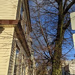 Tree Pruning at 608 Saratoga St Harbor View / Orient Heights
