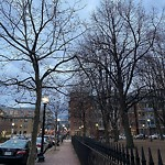 Tree Pruning at 4 E Brookline St, Roxbury