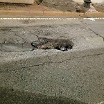 Pothole at 300 Boylston St
