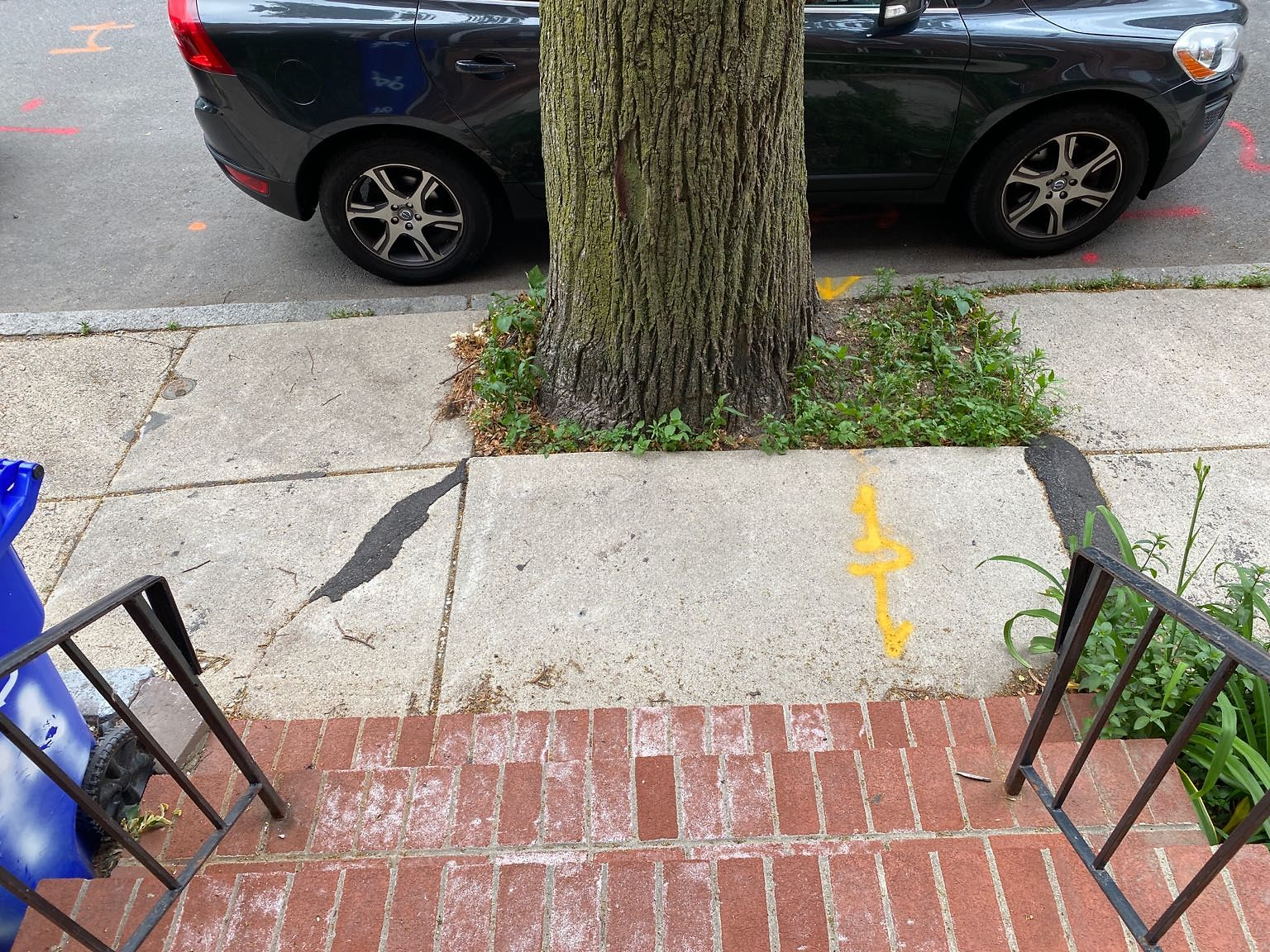 Trip hazard!!!!   The roots of the tree are pushing up the sidewalk and it is hard to park in front of due the way it leans toward the street.
