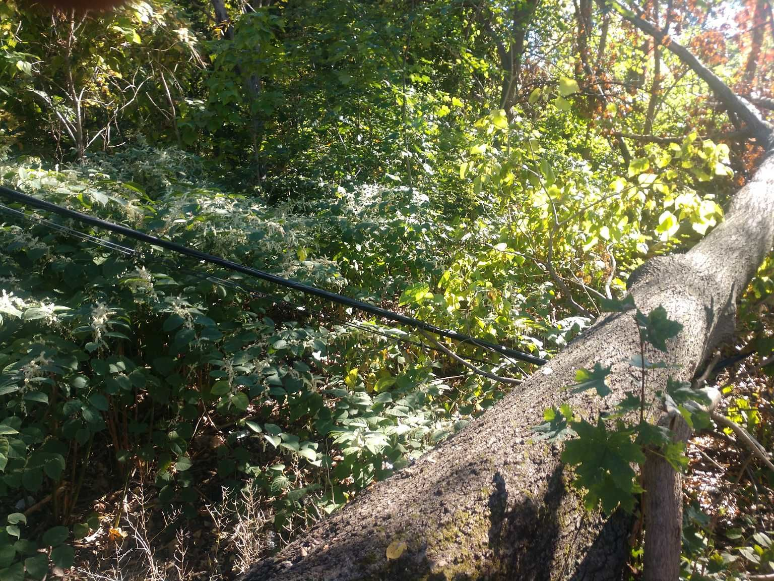 Downed wire with tree falling.  On City property.